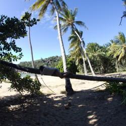 Chillen auf einer Palme
