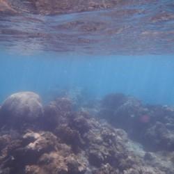 Schnorcheln am Korallenreef