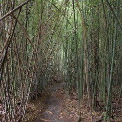 Paronella Park - Bambus