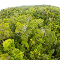 Regenwald aus der Vogelperspektive