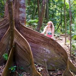 Merkwürdiger Baum