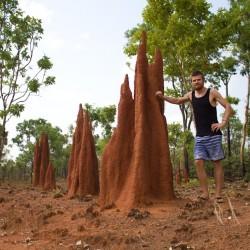 Kleiner Termitenhaufen