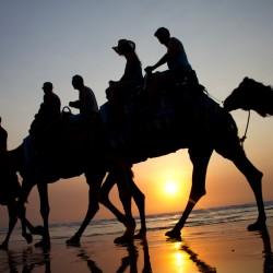 Kamele reiten bei Sonnenuntergang