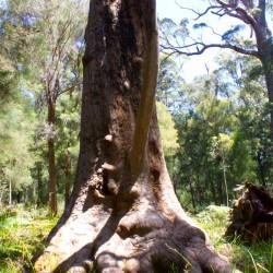Der Baum mit einem Gesicht